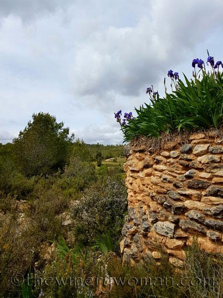 Irises20_4.10.18_TWW