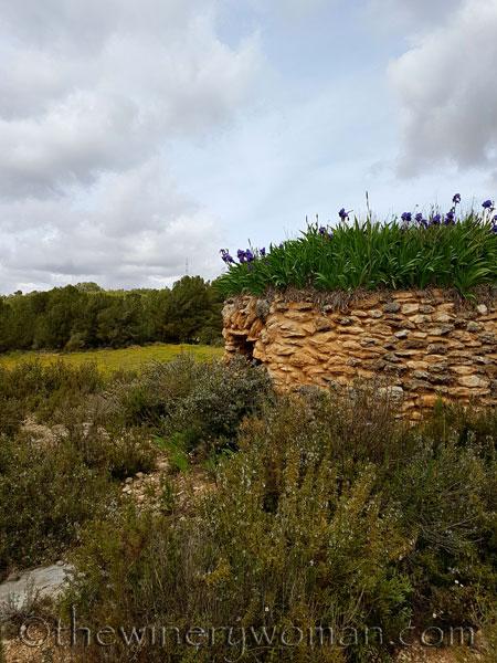 Irises22_4.10.18_TWW