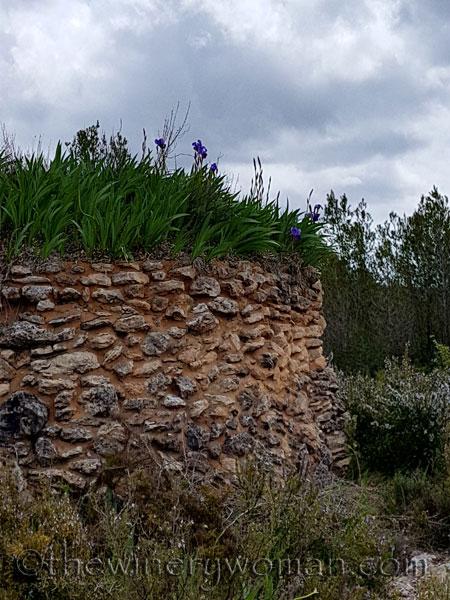 Irises6_4.10.18_TWW