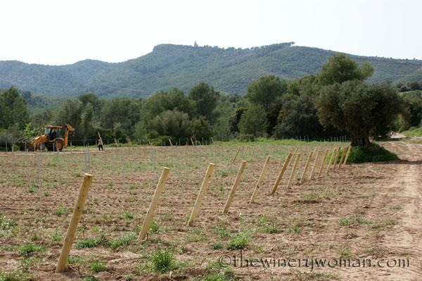Malvasia-vines12_4.24.18_TWW