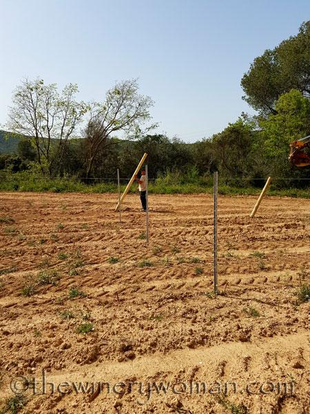 Malvasia-vines6_4.24.18_TWW