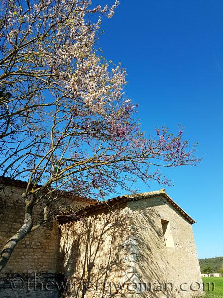 Spring7_4.17.18_TWW