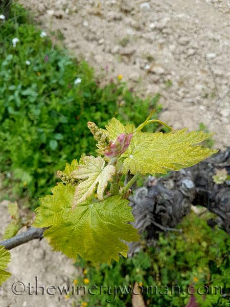 Vines-awakening10_4.10.18_TWW