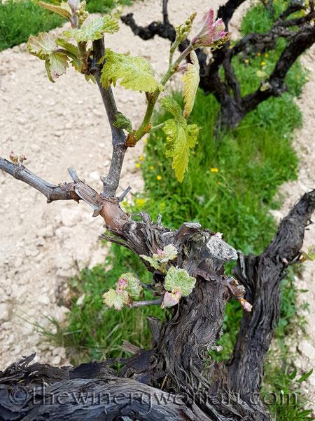 Vines-awakening12_4.10.18_TWW