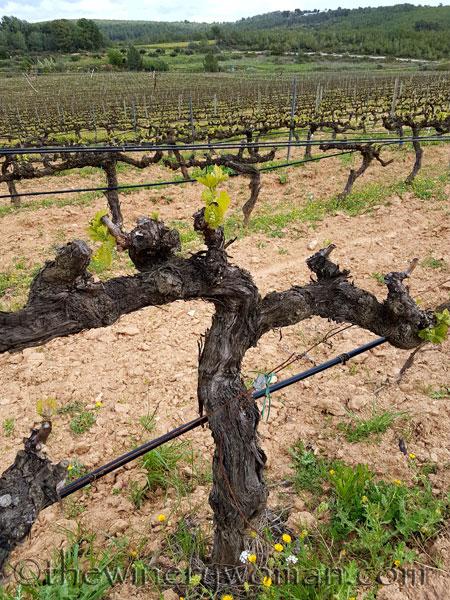 Vines-awakening17_4.10.18_TWW
