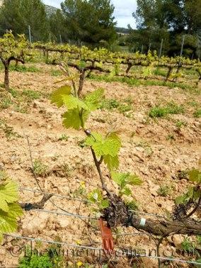 Vines-awakening21_4.10.18_TWW