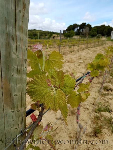 Vines-awakening2_4.10.18_TWW
