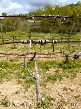Vines-awakening5_4.10.18_TWW