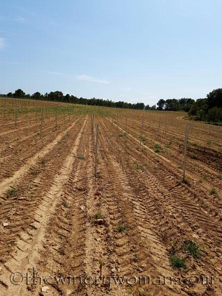 Vineyard-lines11_4.27.18-TWW