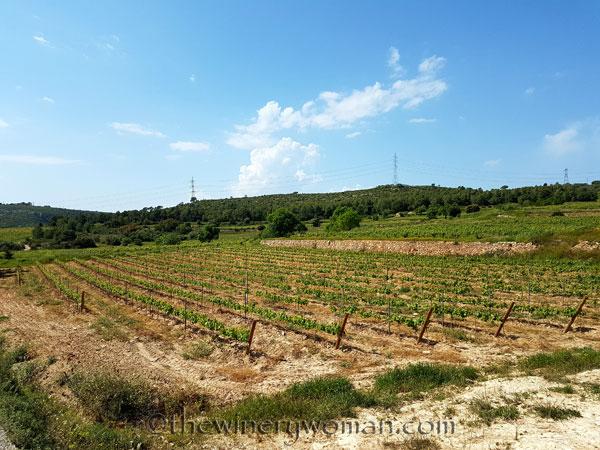 Vineyard-lines12_4.27.18-TWW