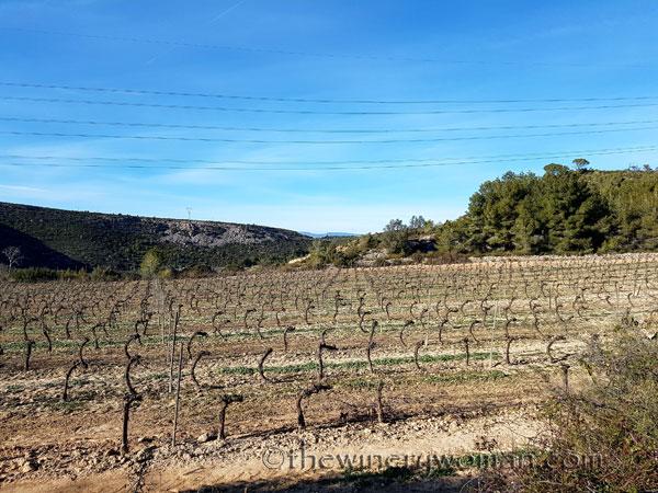 Vineyard-lines17_4.27.18-TWW