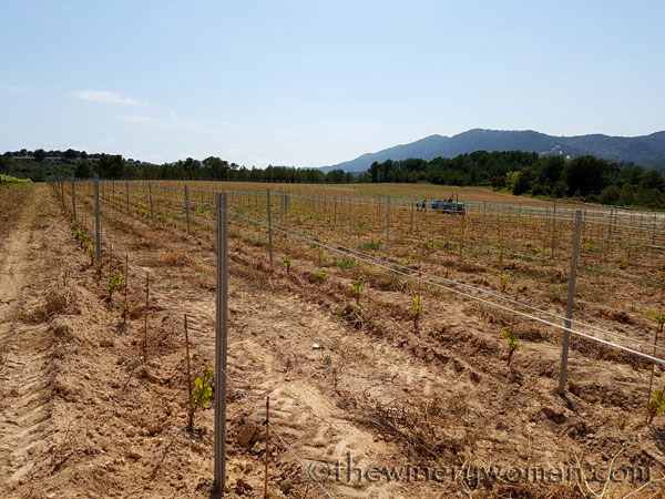 Vineyard-lines4_4.27.18-TWW