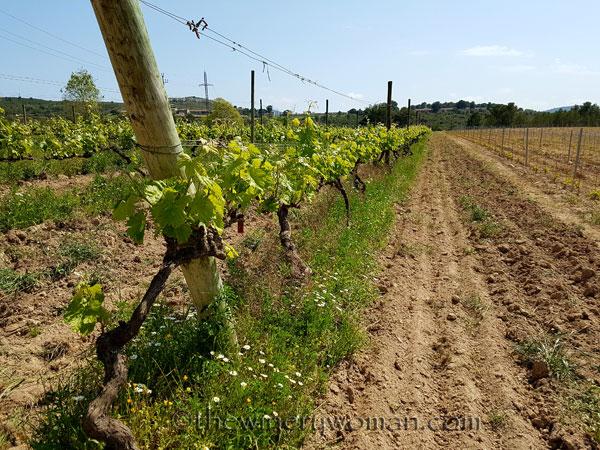 Vineyard-lines5_4.27.18-TWW