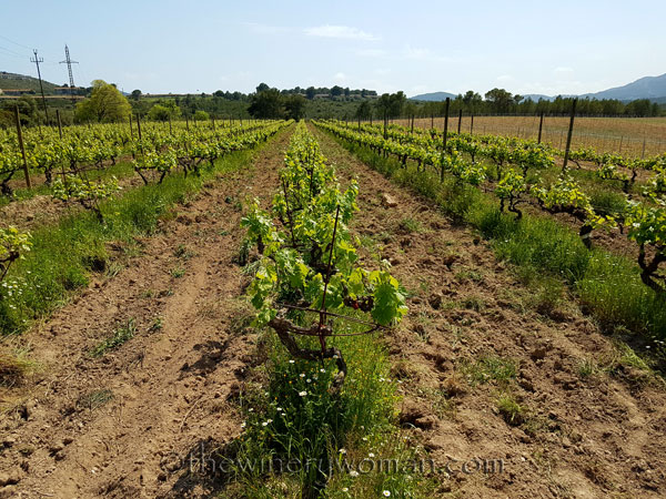 Vineyard-lines8_4.27.18-TWW