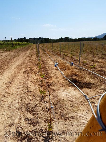 Vineyard-lines_4.27.18-TWW