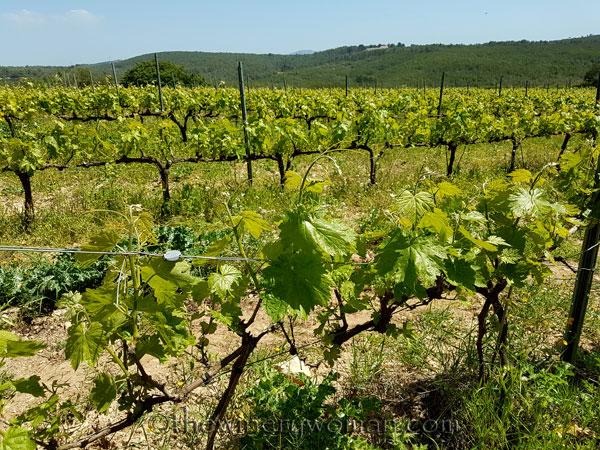 Vineyard10_4.21.18_TWW