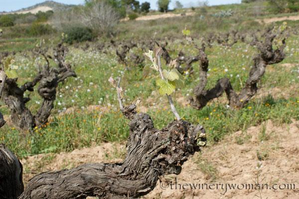 Vineyard10_4.5.18_TWW