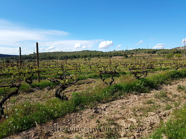 Vineyard10_4.9.18_TWW
