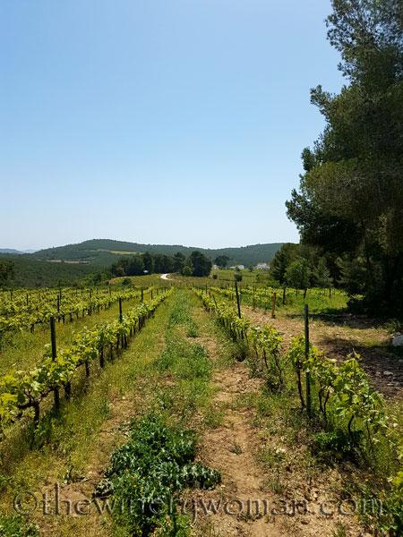 Vineyard14_4.21.18_TWW