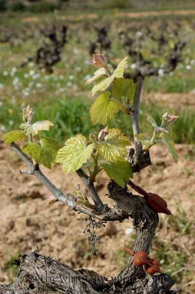 Vineyard15_4.5.18_TWW