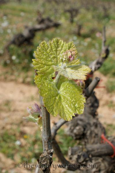 Vineyard16_4.5.18_TWW