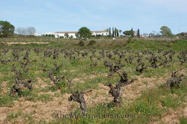 Vineyard17_4.5.18_TWW