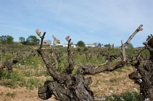 Vineyard18_4.5.18_TWW
