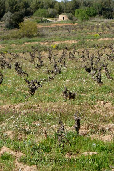 Vineyard19_4.5.18_TWW