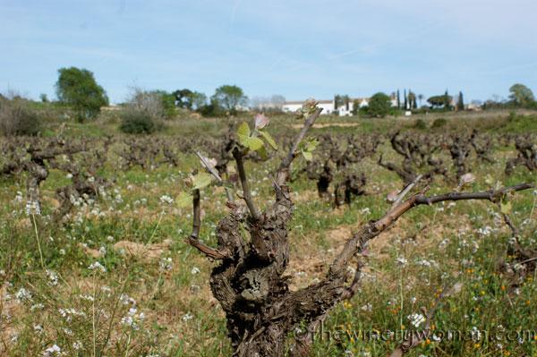 Vineyard20_4.5.18_TWW