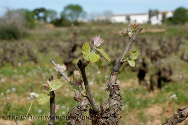 Vineyard21_4.5.18_TWW