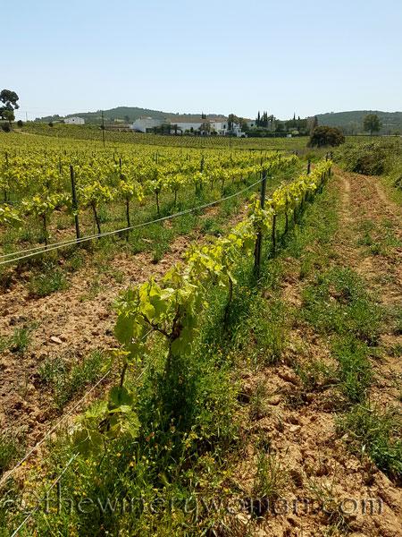 Vineyard2_4.21.18_TWW