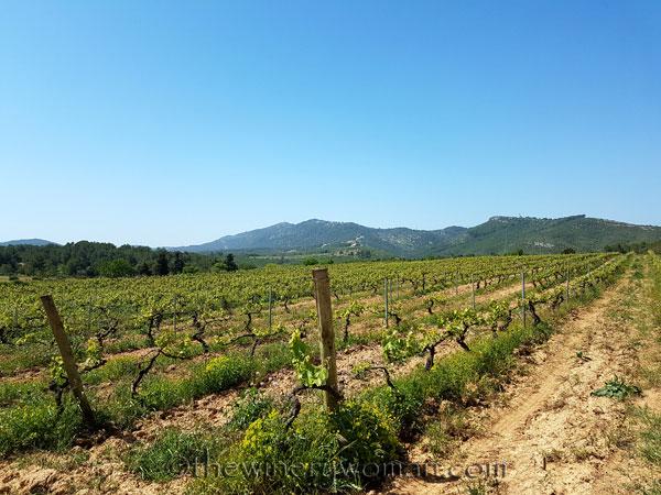 Vineyard3_4.21.18_TWW
