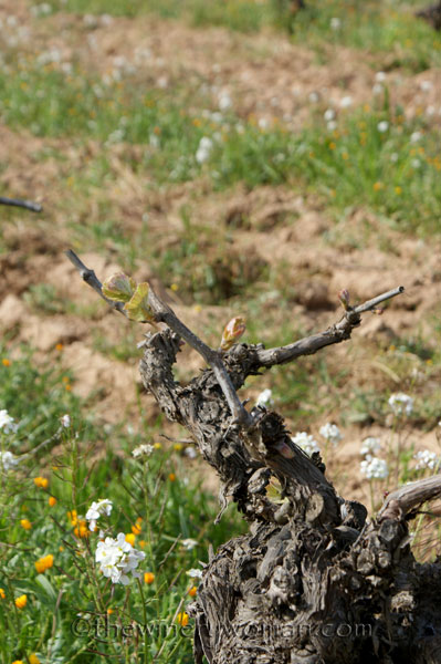 Vineyard4_4.5.18_TWW