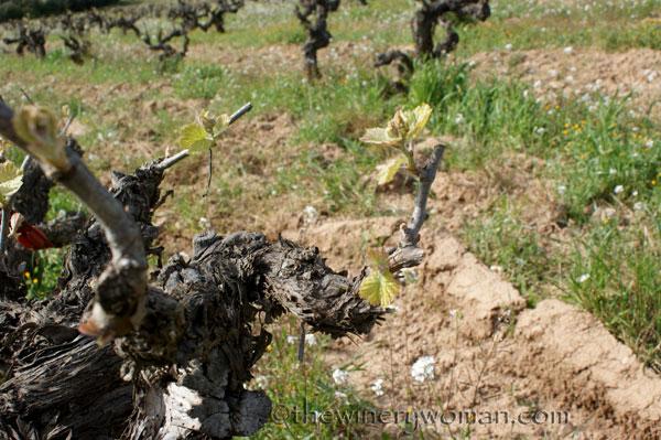 Vineyard5_4.5.18_TWW