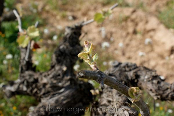 Vineyard6_4.5.18_TWW
