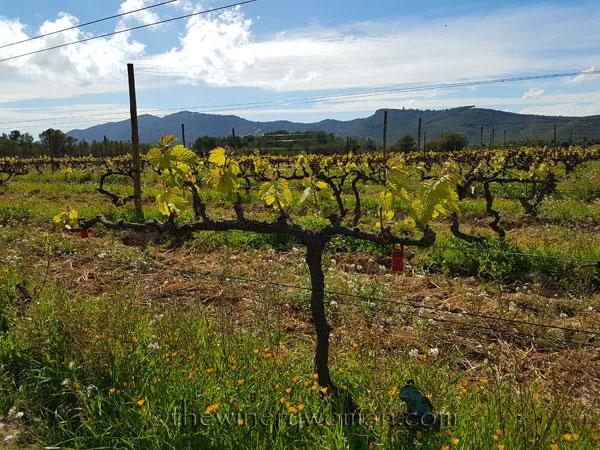 Vineyard6_4.9.18_TWW