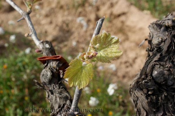 Vineyard7_4.5.18_TWW
