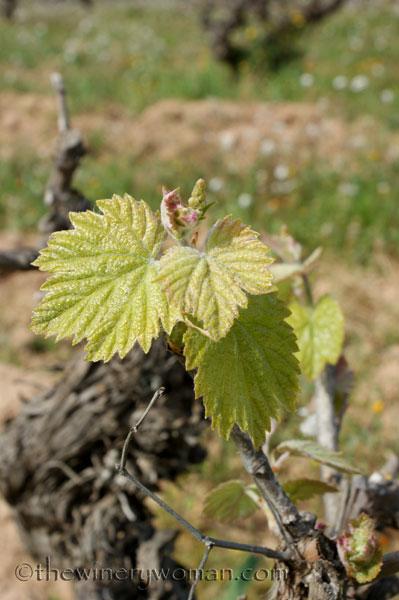 Vineyard8_4.5.18_TWW