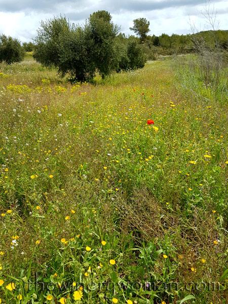 Wildflowers10_4.10.18_TWW