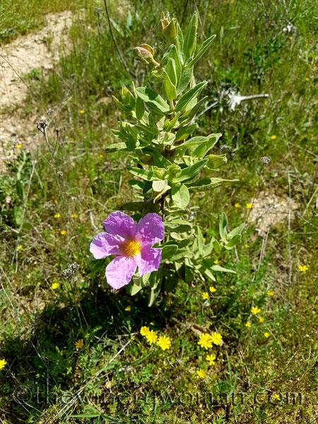 Wildflowers10_4.28.18_TWW