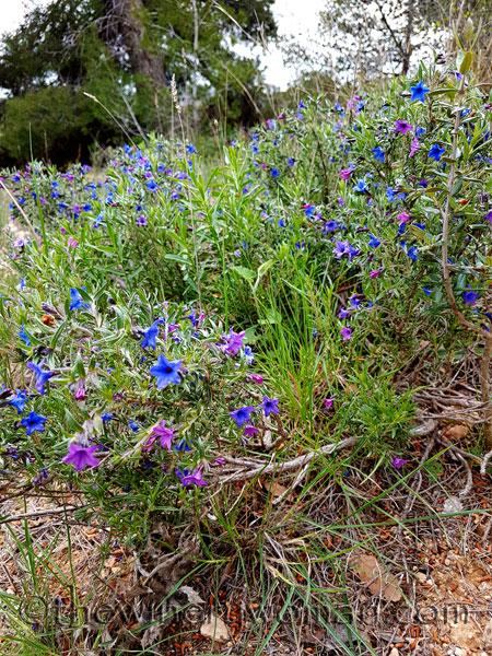 Wildflowers11_4.10.18_TWW