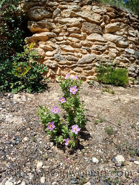 Wildflowers11_4.28.18_TWW