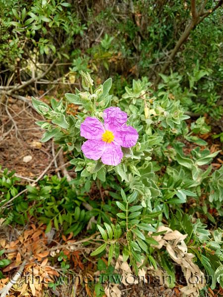 Wildflowers12_4.10.18_TWW