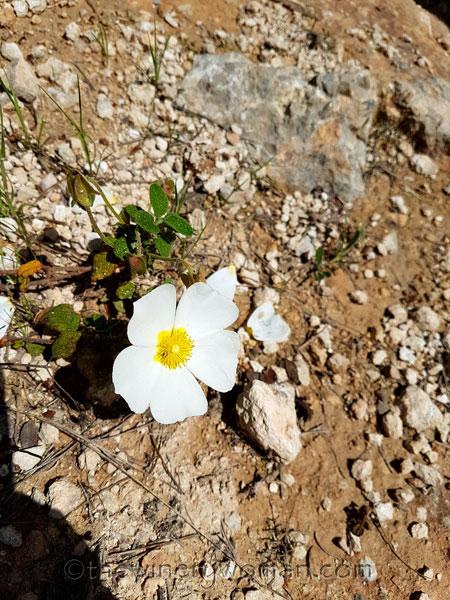 Wildflowers12_4.28.18_TWW