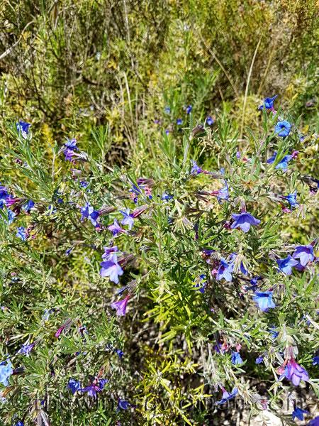 Wildflowers14_4.28.18_TWW