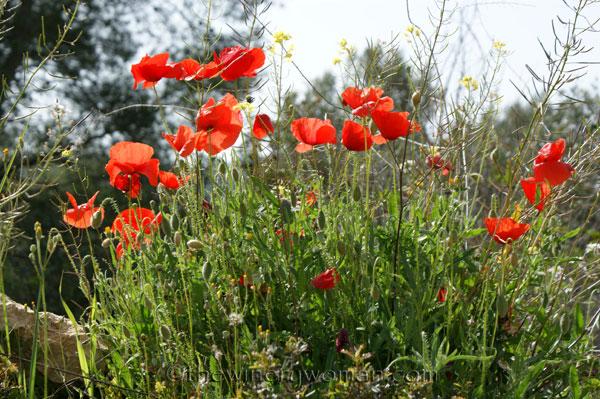 Wildflowers15_4.28.18_TWW