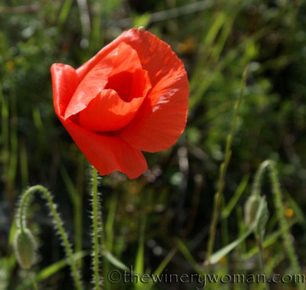Wildflowers16_4.28.18_TWW