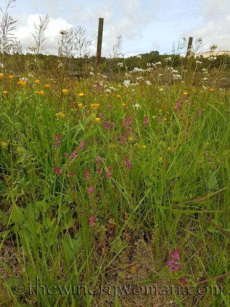 Wildflowers2_4.10.18_TWW