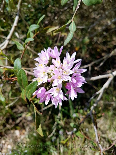 Wildflowers2_4.28.18_TWW