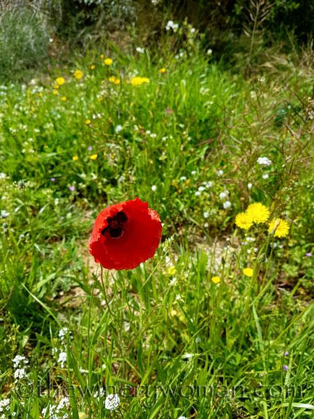 Wildflowers3_4.10.18_TWW